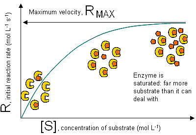 internal assessment on enzyme concentration 12852 u/mg protein 1 unit will decompose 1µm h2o2/min at ph 7 25ºc, while the h2o2 concentration falls from 103-92mm, measured determine activity in terms of the unit specified on the label, start with 1mg/ml solution of enzyme once activity is determined reconstitute the enzyme.